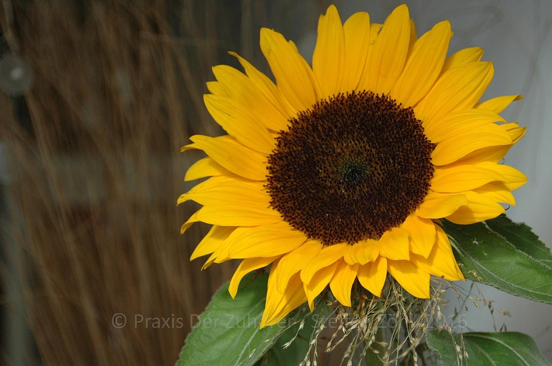 Die Sonnenblume SinnSationsGeschichten © Praxis Der Zuhörer - Steffen Zöhl, 2016